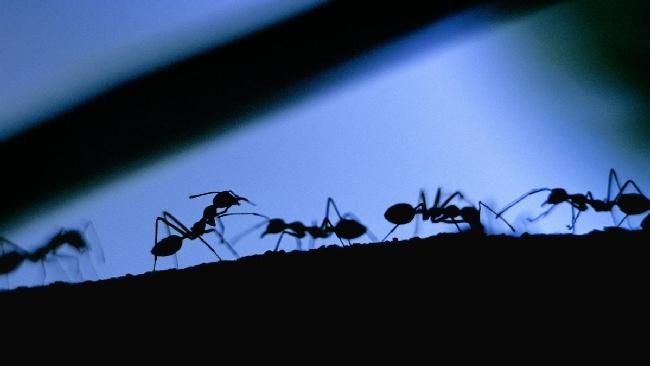 Nel futuro i LED sostituiranno i pesticidi